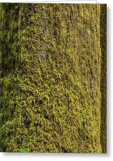 Moss Greeting Cards - Moss Covered Tree Olympic National Park Greeting Card by Steve Gadomski