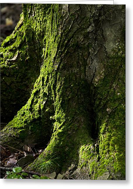 Moss Covered Tree Trunk Greeting Card by Christina Rollo