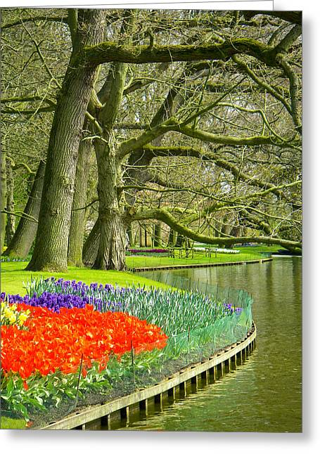 Geobob Greeting Cards - Moss Covered Trees and Spring Tulips in Keukenhof Gardens near Lisse Netherlands Greeting Card by Robert Ford