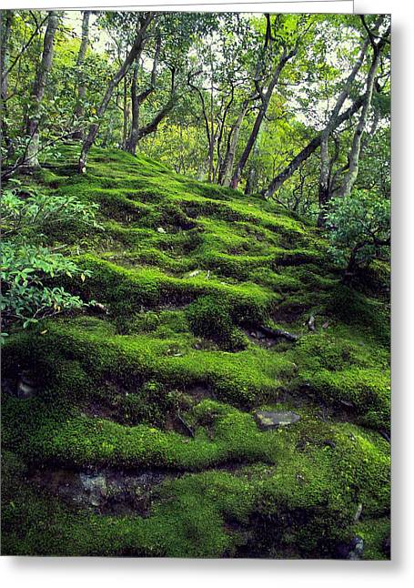 Dappled Light Greeting Cards - MOSS FOREST in KYOTO JAPAN Greeting Card by Daniel Hagerman