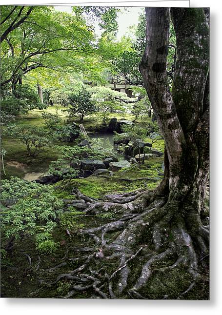 Dappled Light Greeting Cards - Moss Forest Japan Greeting Card by Daniel Hagerman