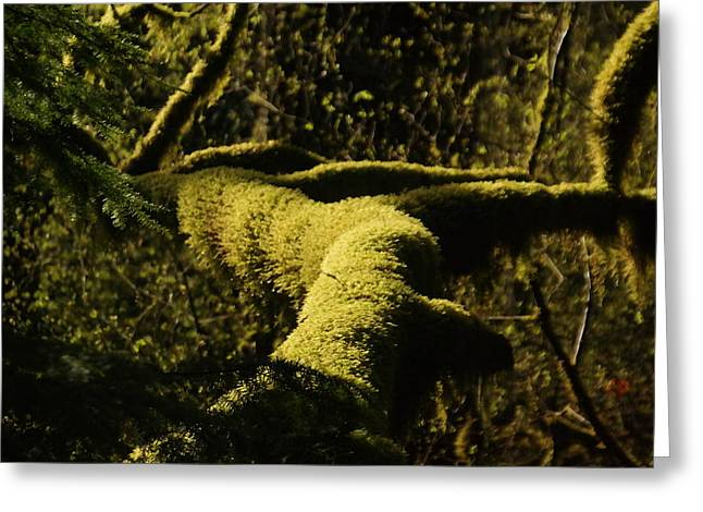 Moss Green Greeting Cards - Moss In A Sliver Of Sun Greeting Card by Jeff  Swan