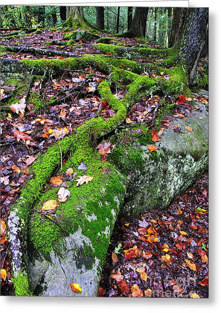Tree Roots Greeting Cards - Moss Roots Rock and Fallen Leaves Greeting Card by Thomas R Fletcher