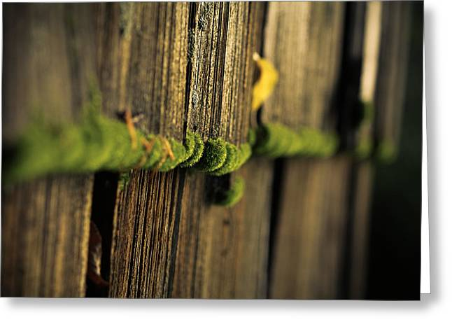 Moss Green Greeting Cards - Moss Greeting Card by Shane Holsclaw
