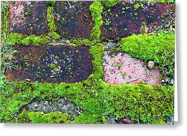 Moss Greeting Cards - Moss Texture Abstract Greeting Card by Nancy Merkle