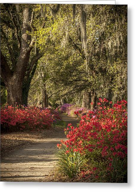 Steve Dupree Greeting Cards - Moss Trail Greeting Card by Steve DuPree