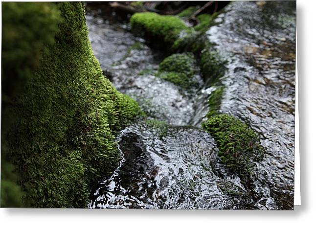 Bc Greeting Cards - Moss world Greeting Card by Graham Foulkes