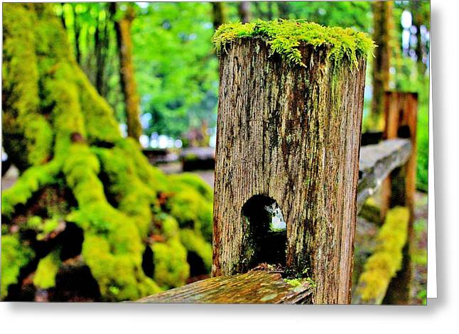 Moss Green Greeting Cards - Mosspost Greeting Card by Benjamin Yeager