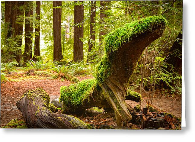 Marin County Greeting Cards - Mossy Creature Greeting Card by Bryant Coffey