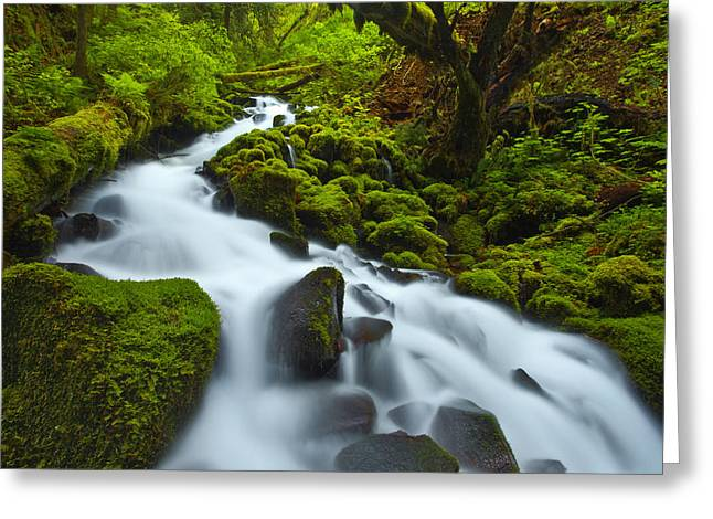 Lush Greeting Cards - Mossy Creek Cascade Greeting Card by Darren  White
