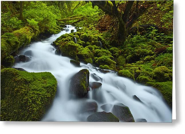 Mossy Creek Cascade Greeting Card by Darren  White