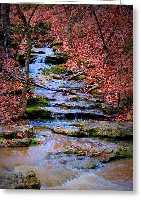 Southern Boone County Greeting Cards - Mossy Creek Greeting Card by Cricket Hackmann