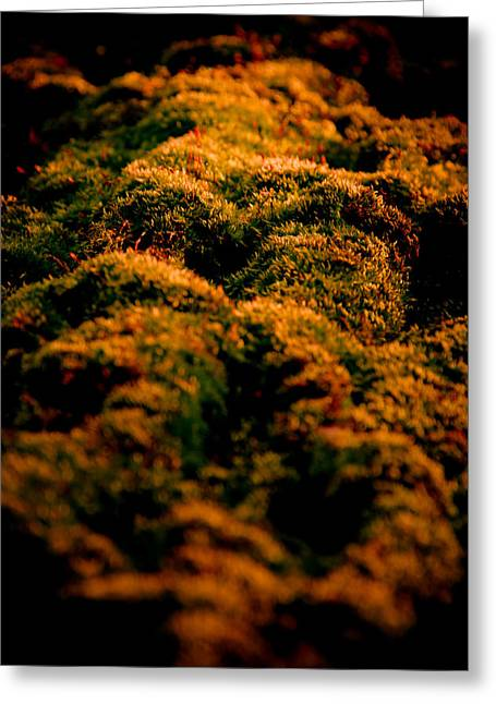 Moss Greeting Cards - Mossy Hills Greeting Card by Loriental Photography