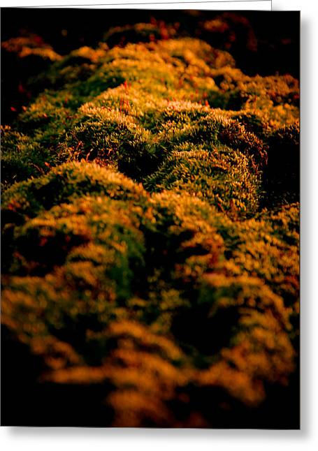 Mossy Hills Greeting Card by Loriental Photography