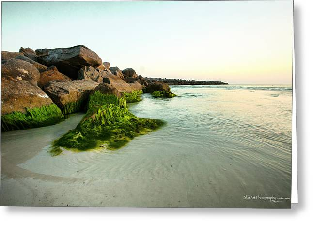 Panama City Beach Greeting Cards - Mossy Lagoon Greeting Card by Volker blu Firnkes