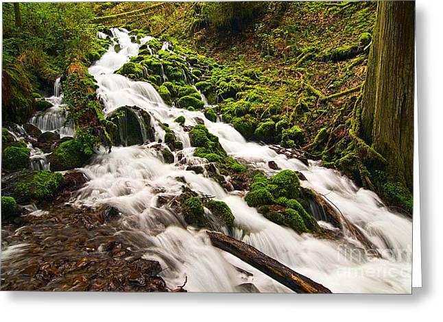 Storybook Greeting Cards - Mossy River flowing. Greeting Card by Jamie Pham