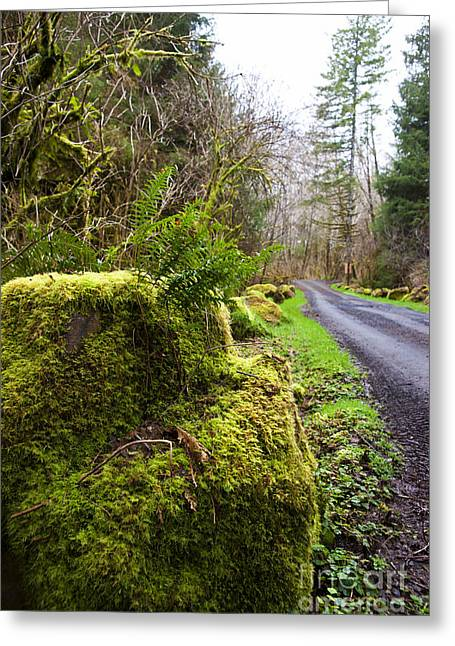Moss Green Pyrography Greeting Cards - Mossy Road Greeting Card by Peggy Lanford