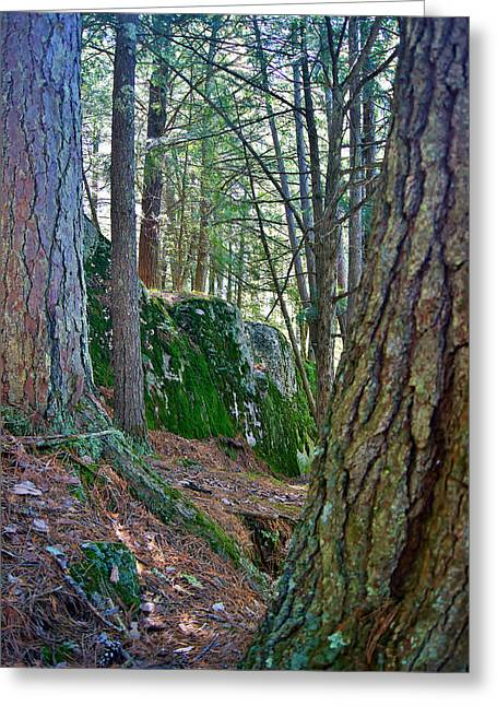 Dave Greeting Cards - Mossy Rock Ledges - Daves Falls - Amberg Wisconsin  Greeting Card by Carol Toepke