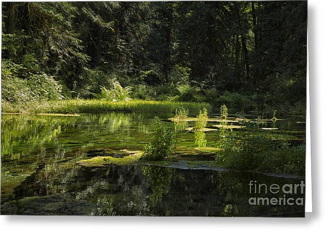 Fed Greeting Cards - Mossy Spring-Fed Pond Greeting Card by Belinda Greb