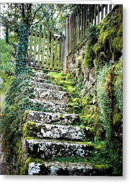 Stepping Stones Greeting Cards - Mossy Stairs Greeting Card by David Waldo