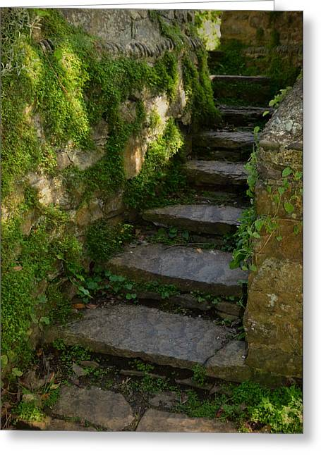 Selworthy Greeting Cards - Mossy Steps Greeting Card by Carla Parris
