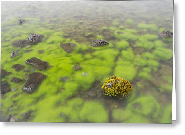 Nature Abstracts Greeting Cards - Mossy Stone In Lake Thingvallavatn Greeting Card by Bill Coster