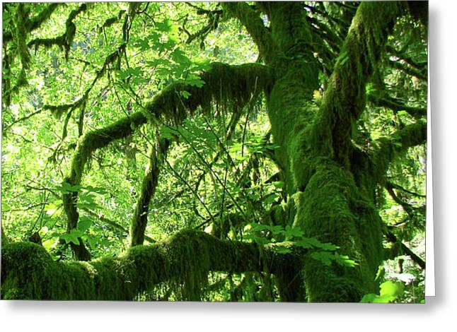 Mossy Tree Greeting Card by Athena Mckinzie