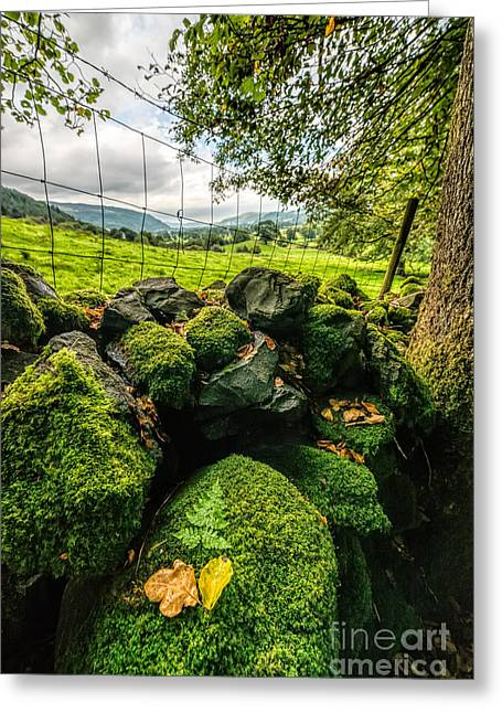 Moss Greeting Cards - Mossy Wall Greeting Card by Adrian Evans