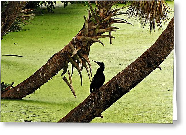 Nature Center Pond Greeting Cards - Mossy Wetland with Anhinga Greeting Card by MTBobbins Photography