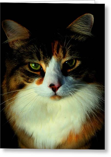 Stephen Melcher Greeting Cards - Most Interesting Cat Greeting Card by Stephen Melcher