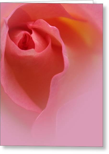 Rose Portrait Greeting Cards - Most Precious Greeting Card by  The Art Of Marilyn Ridoutt-Greene