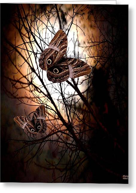 Maria Urso Digital Art Greeting Cards - Moth Effect Greeting Card by Maria Urso