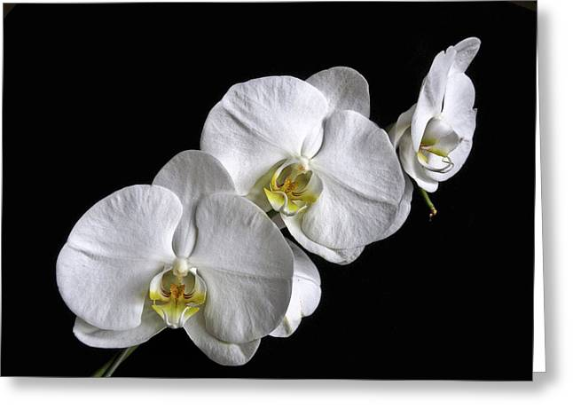 Moth Orchid Trio Greeting Card by Ron White