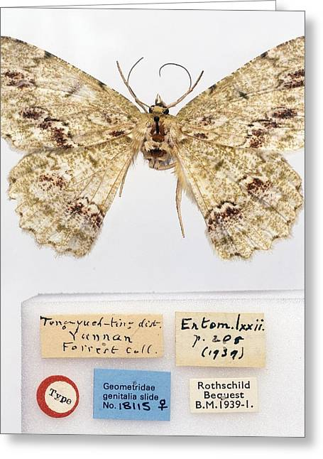 Label Greeting Cards - Moth Greeting Card by Science Photo Library