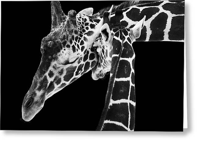 Bw Greeting Cards - Mother and Baby Giraffe Greeting Card by Adam Romanowicz
