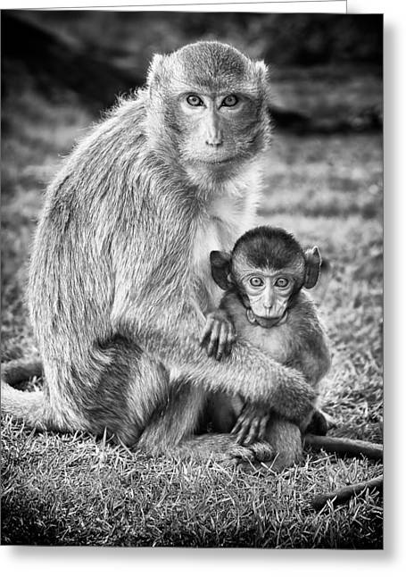 Caring Mother Greeting Cards - Mother and Baby Monkey Black and White Greeting Card by Adam Romanowicz
