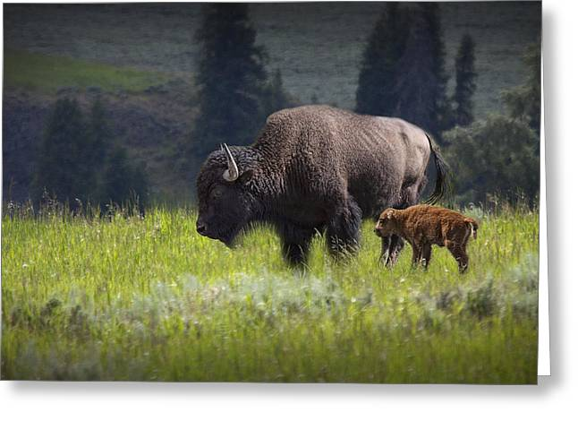 Cattle-shed Greeting Cards - Mother and Child Bison Greeting Card by Randall Nyhof