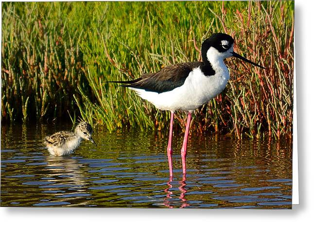 Sea Birds Greeting Cards - Mother and Child Greeting Card by Brian Tada