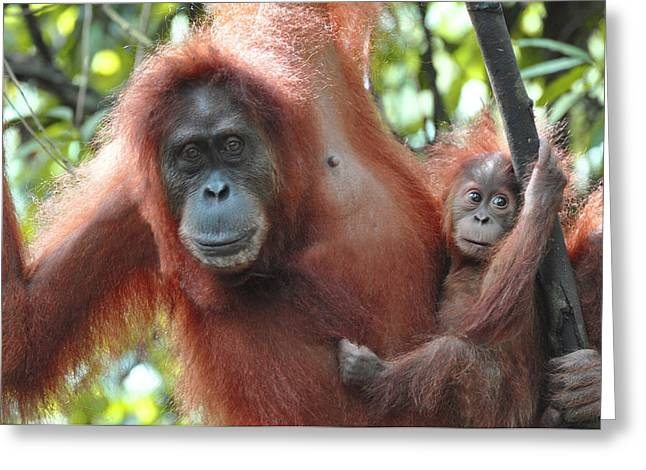 Humanlike Greeting Cards - Mother and child hanging out Greeting Card by Laura Rodriguez
