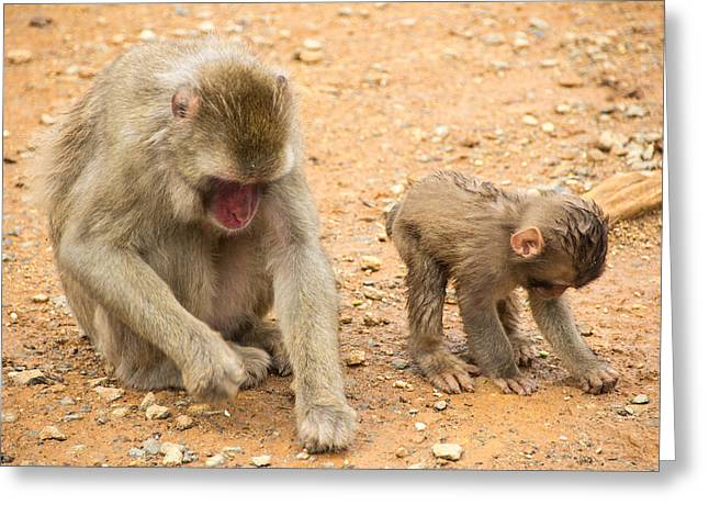 Laura Palmer Greeting Cards - Mother and child macaque Greeting Card by Laura Palmer