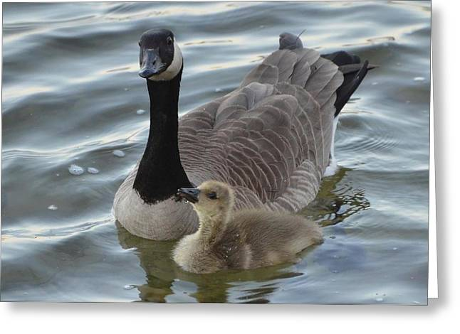 Mother Goose Greeting Cards - Mother And Child Reunion Greeting Card by Omer  Vautour