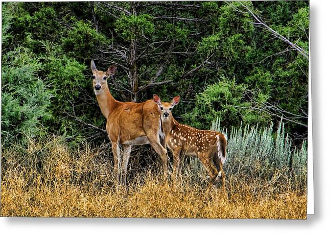 Ron Roberts Photography Greeting Cards - Mother and Child Greeting Card by Ron Roberts