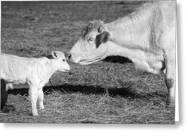 Barn Yard Photographs Greeting Cards - Mother and Child Greeting Card by Steven  Michael