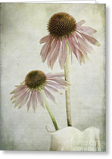Flower Blossom Photographs Greeting Cards - Mother and Daughter Greeting Card by Marion Galt