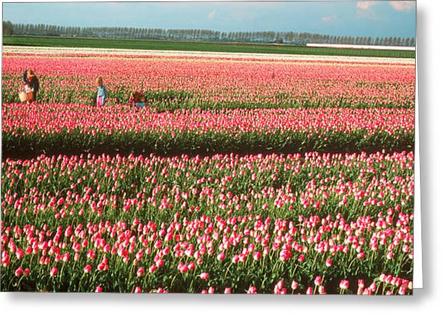 Three People Photographs Greeting Cards - Mother And Daughters In Field Of Red Greeting Card by Panoramic Images