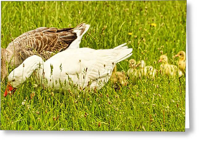 Mother Goose Greeting Cards - Mother AND Father goose and gooslings Greeting Card by Geraldine Scull