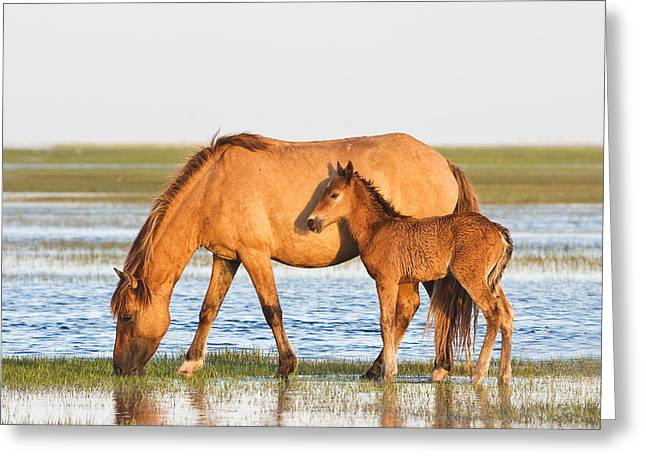 Rachel Carson Greeting Cards - Mother and Foal Greeting Card by Bob Decker