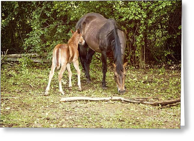 Rural Scenes Photographs Greeting Cards - Mother and Foal Greeting Card by Juli Scalzi