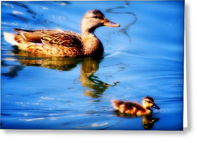 Baby Mallards Digital Art Greeting Cards - Mother And Son Greeting Card by Aurelio Zucco