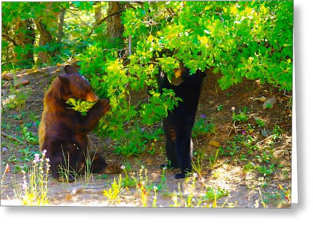 Sandias Greeting Cards - Mother Bear And Cub Greeting Card by Jeff  Swan